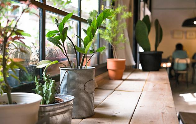 Plantas expuestas al polvo
